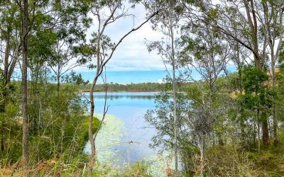 Visiting Lake Manchester, Queensland